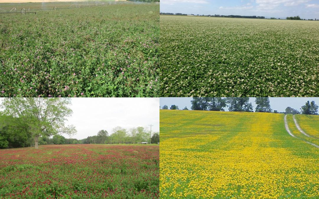 Forage Legume Webinar Series Recordings & Resources