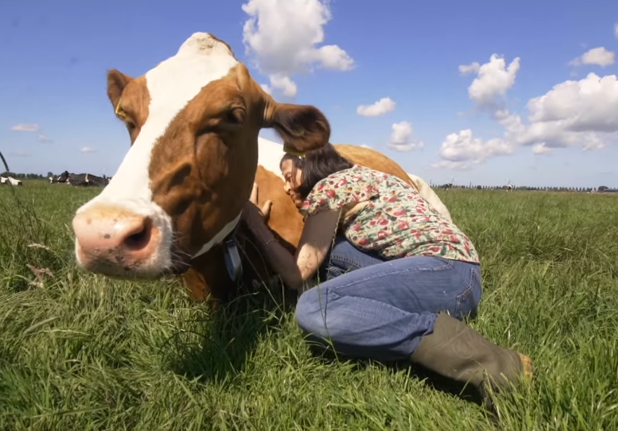Friday Feature:  Cow Cuddling Agritourism