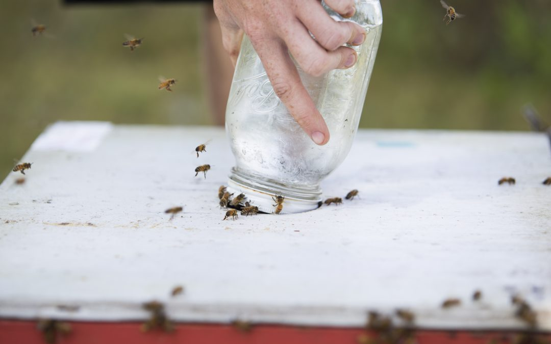 As the Main Honey Flow Winds Down, What's Next for Beekeepers?