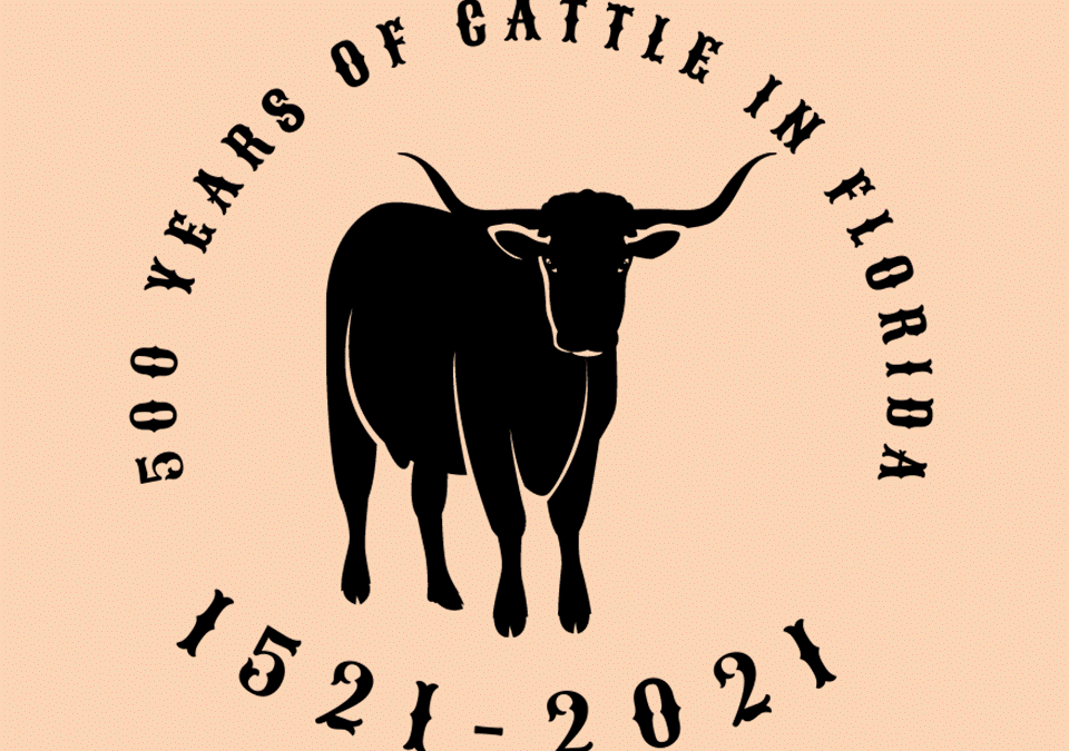 Friday Feature:  500 Years of Cattle in Florida