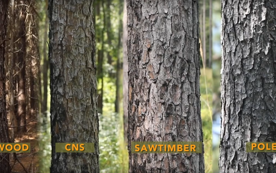 Friday Feature:  Ag Awareness of Forest Products