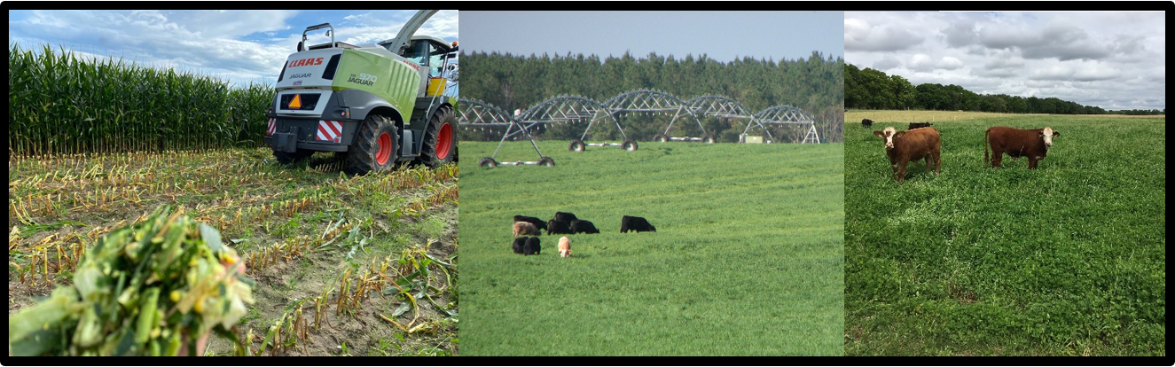 2021 Beef & Forage Field Day featured image