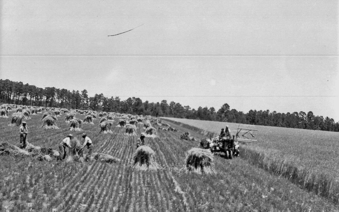 Celebrating a Century of Service to the Agriculture Industry by the UF/IFAS North Florida Research and Education Center