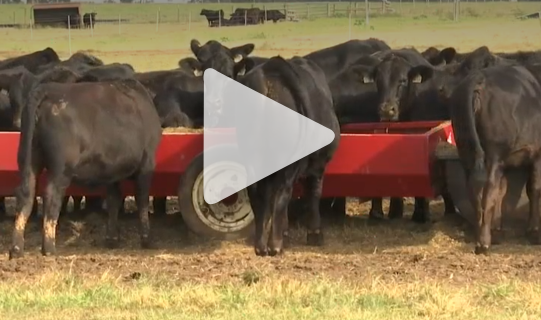 Friday Feature:  2021 Beef & Forage Field Day in the News