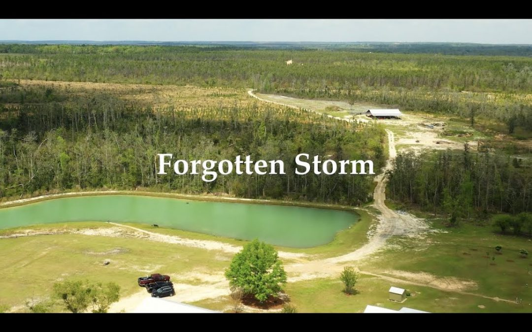 Friday Feature:  the Forgotten Storm