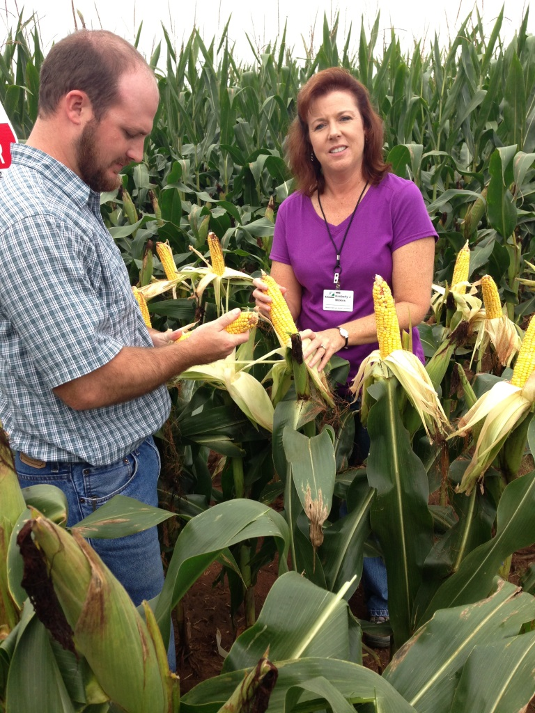 Josh Thompson, UF/IFAS Regional Agronomy Agent and Kim Wilkens compare corn varieties at the West Florida Research and Education Center Variety Trial.