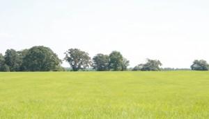 Yellowing in bahiagrass hay field