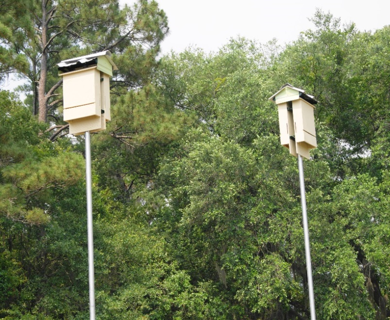 Putting up a few bat houses is an easy strategy to attract bats.