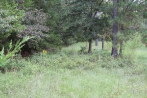 "Food plots are often more effective when located on ""edges"" where habitats change."