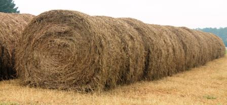 Storing hay directly on the ground, without protection from the weather can result in large DM losses.