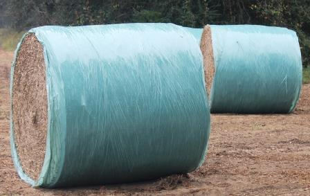 Individually wrapping bales with plastic is an effective way to reduce storage loss.