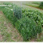 Under Cover: The Revealing Story behind Cover Crops
