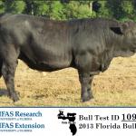 Florida Bull Test Sale January 18