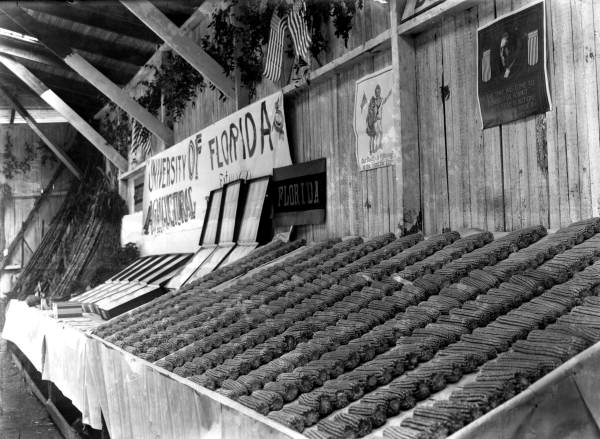 Corn Club exhibit at the Jackson County fair, 1917.  Photo Credit: State Archives of Florida, Florida Memory, http://floridamemory.com/items/show/35976